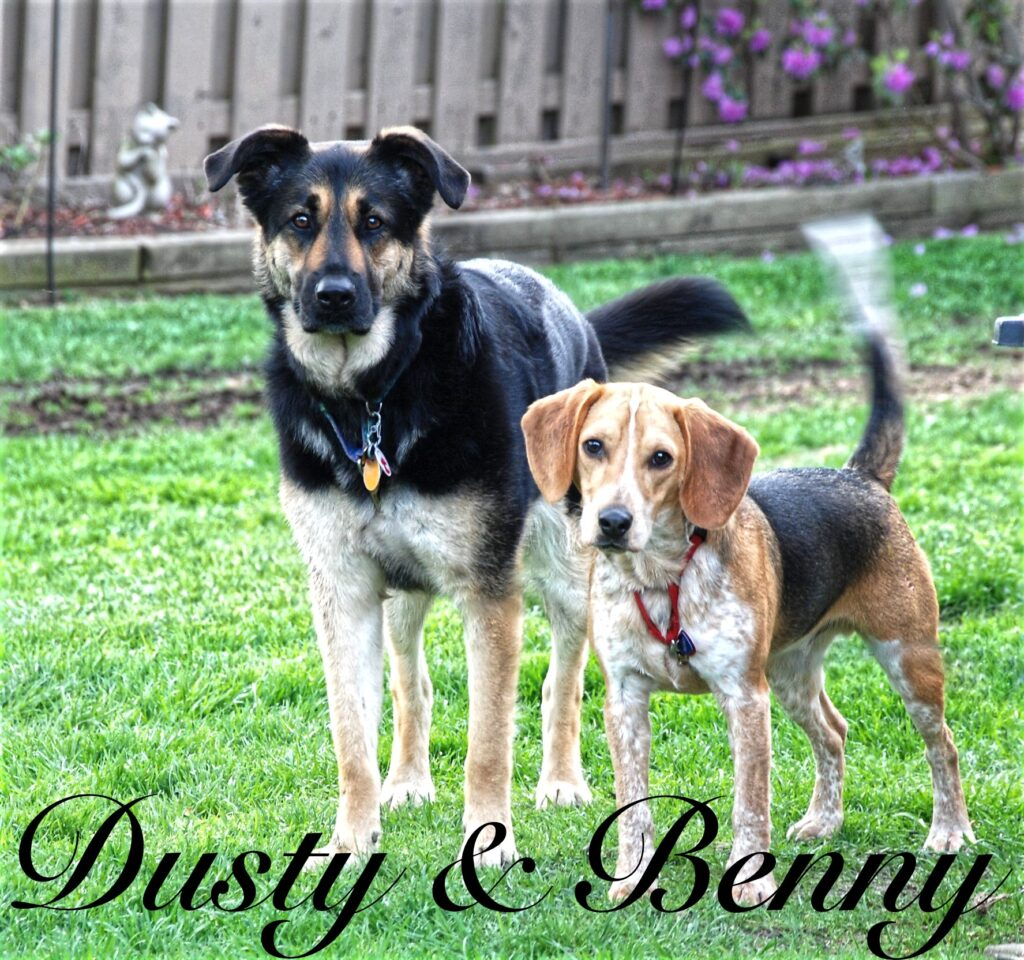 My German Shepherd and Beagle